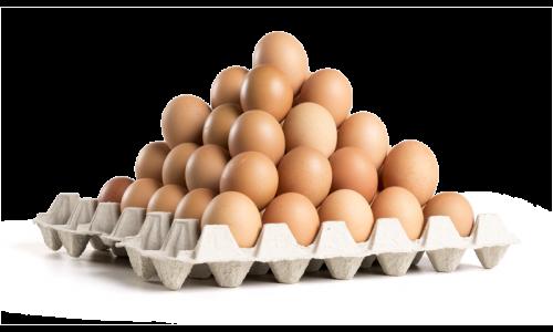 Consumption eggs